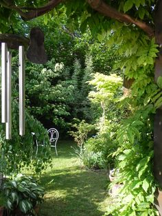 My garden.....