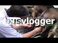 Artisan Cheese Making at White River Creamery - YouTube