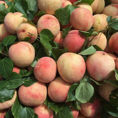 peach, fruit, and aesthetic image Peach Aesthetic, Aesthetic Food, Aesthetic Photo, Aesthetic Pictures, Angel Aesthetic, Living In London, Behind Blue Eyes, No Bad Days, No Rain