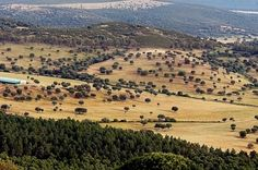 Badajoz. Gran finca 1.780 Ha y coto de caza en venta. La Puebla de Alcocer. Extremadura.