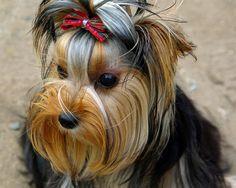 Mujer recupera perro que fue robado durante primera cita en #EEUU