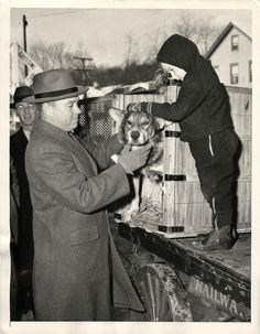 """1945- War dog """"Chips"""", the only animal to hold the Silver Star, is greeted by his family after return to U.S. He was decorated for heroism in the invasion of Sicily."""