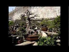 Bonsai in Nanjing, China Part Nanjing, Bonsai Garden, Videos, Image