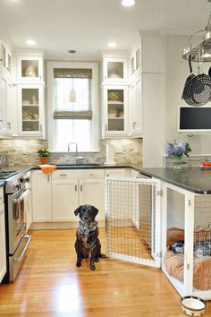 The Ideal Pet-Owner's House: Built In Beds and Pet Crates