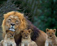 Okay okay, Dad! I'll behave! You're givin' me a headache!
