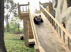 Pandas on a Slide! http://cityrag.com/2012/07/pandas-on-a-slide/