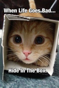 I feel this way at times but there is no room:  all the boxes have cats in them!