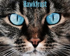 Hawkfrost: The only kin to Tigerstar and followed in his footsteps. He killed Hollyleaf who was defending Ivypool.