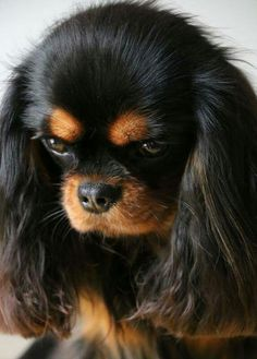 I am trying my Angry face , but I can't ! I am to Cute.!