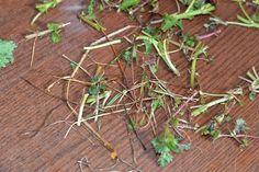 Mancare de urzici cu usturoi - CAIETUL CU RETETE Herbs, Food, Eten, Herb, Meals, Spice, Diet