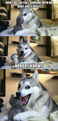 Everybody loves Pun Husky!blackdogrunsd - Funny Duck - Funny Duck meme - - Everybody loves Pun Husky!blackdogrunsd The post Everybody loves Pun Husky!blackdogrunsd appeared first on Gag Dad. Funny Animal Jokes, Dog Jokes, Puns Jokes, Corny Jokes, Stupid Funny Memes, Funny Puns, Funny Relatable Memes, Funny Animal Pictures, Funny Animals
