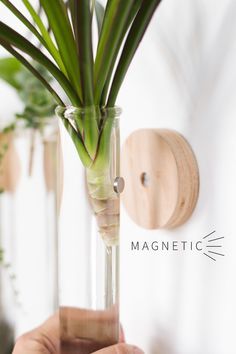 Do It Yourself Discover Ideas House Plants Decor, Plant Decor, Diy Plant Hanger, Hanging Plants, Indoor Plants, Plant Projects, Diy Inspiration, Deco Floral, Diy Interior