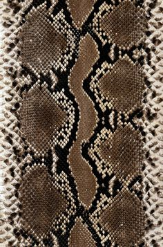 Find Snake Skin Texture stock images and royalty free photos in HD.