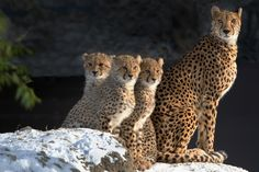 Family by Jutta Kirchner