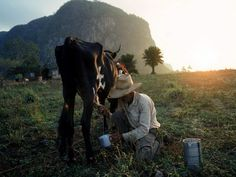 Cuba Photos -- National Geographic - Viñales Valley A farmer collects milk straight from the source in Cuba's picturesque Viñales Valley. The valley's strange knolls, called mogotes, evidence eons of underground erosion. The hard limestone hummocks are all that's left standing of an ancient limestone plateau.