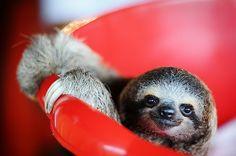 Pet sloth... haha you are awful at racing. And his name shall be Sir Karl Slothington