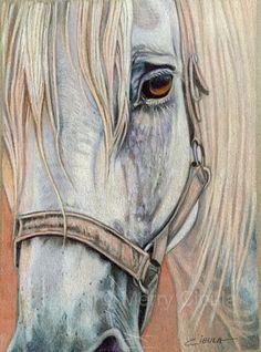 Un cheval de trait Percheron montres calmement. Le dessin est réalisé au crayon de couleur sur papier sans acide et mesure 9 5/8 x 7. Il est monté et rétractable pour une protection.