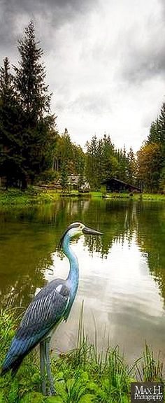 STORK - AUSTRIA Vorderstoder  OÖ - AMAZING LANDSCAPE SHOT #by Max Habich on flickr.com