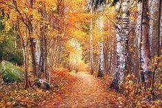 Autumn by Pajunen.deviantart.com on @DeviantArt