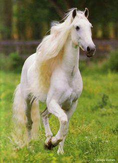 Horse / Lipizza Moon Shadow.jpg