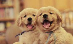 happy puppies : )