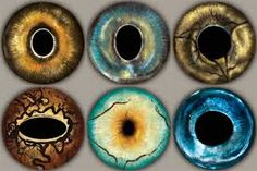 Image result for macro of animal eyes