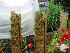 THE MUSINGS OF A TRANSPLANTED GARDENER: Strawberry towers