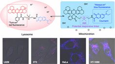 Defining Cancer Cell Bioenergetic Profiles Using a Dual Organelle-Oriented Chemosensor Responsive to pH Values and Electropotential Changes