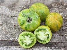 Green Bell Pepper Tomato