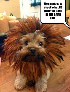 I Has A Hotdog - Page 11 - Loldogs n Cute Puppies - funny dog pictures - Cheezburger