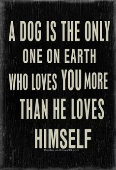 A dog is the only one on earth who loves you more than he loves himself. (RIP LXS)