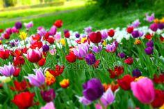 Beautiful springtime photo © Olgart #109563768