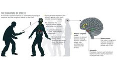 Stress: The roots of resilience Most people bounce back from trauma — but some never recover. Scientists are trying to work out what underlies the difference. Cortisol, Anterior Cingulate Cortex, Traumatic Brain Injury, Post Traumatic, Limbic System, Ptsd Awareness, Complex Ptsd, Fight Or Flight, Stress Disorders