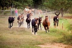 March 28 – Mule Day in Columbia, Tennessee