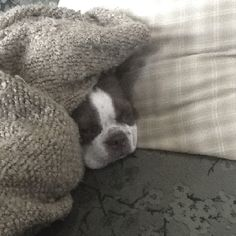 Doggie in a blanket