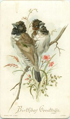 ❥ Love the fluffy necks on these birds~ vintage birthday card