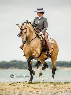clémence faivre - horse show Pretty Horses, Beautiful Horses, Andalusian Horse, Friesian Horse, Arabian Horses, Dressage Horses, Draft Horses, Majestic Horse, Mundo Animal