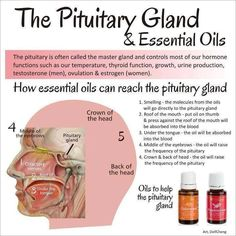 Doterra oils for pituitary gland