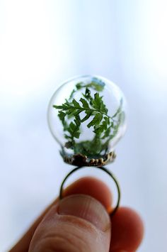 Miniature terrarium ring wearable forest fern