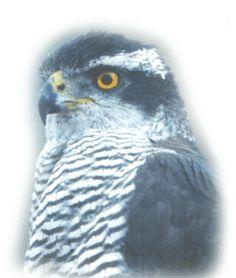 Centro de Recuperação de Animais Selvagens (CRAS) - Município do Cadaval