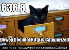 Dewey <3 kitties? Yes we do!