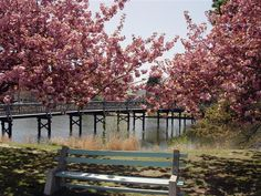 Lifestyles in Spring Lake New Jersey