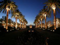 Armeria Palmtreelightng Palm Tree Lighting