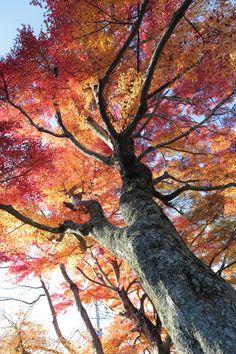 2012.11.25_15;43;09  Autumn color. Arima,Japan.