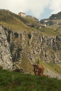 Rifugio Baitone nel Parco dell'Adamello (Foto di L.Zamprogno), collocato in una delle aree chiave per lo stambecco nell'area protetta (www.uomoeterritoriopronatura.it).