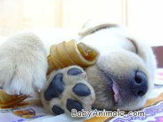 Baby Animals -  Picture of baby puppy with bone cute