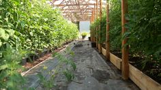 Tomatoville® Gardening Forums - Great thread about growing tomatoes in pots and in garden beds. Those tomatoes on the left side of the pic are growing in 4 gallon pots!