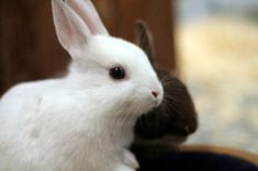 In the case that your rabbit is pregnant or recently had babies, here are a few baby bunny care tips.