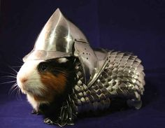 This fierce and honorable knight. | The 24 Most Important Guinea Pigs In The Entire World