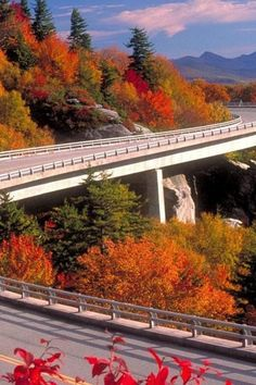 BLUE RIDGE PARKWAY, VIRGINIA AND NORTH CAROLINA  Extending from Virginia to North Carolina, this 469-mile parkway connects the Shenandoah and Great Smoky Mountains national parks. Visit in October to catch the gorgeous fall foliage, and take a pit stop in quirky Asheville.